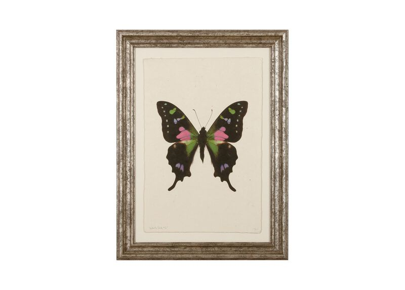 Butterfly Study II ,  , large_gray