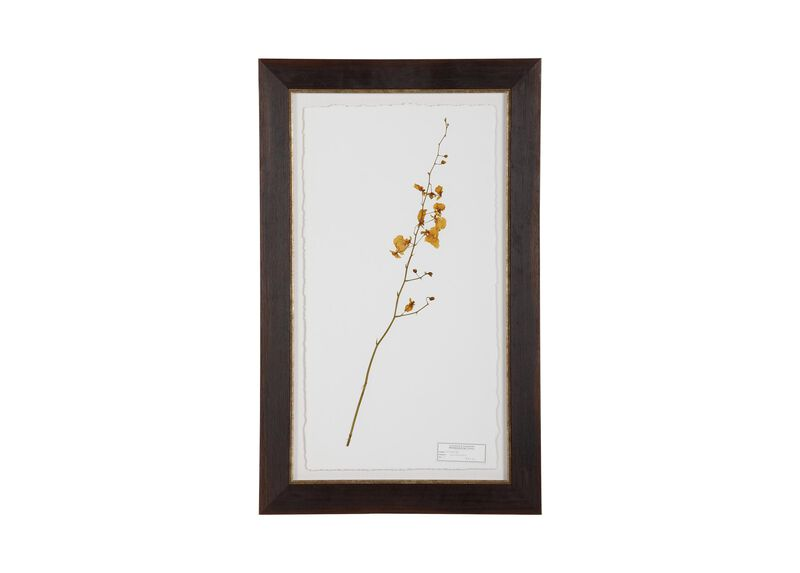 Oncidium at Ethan Allen in Ormond Beach, FL | Tuggl