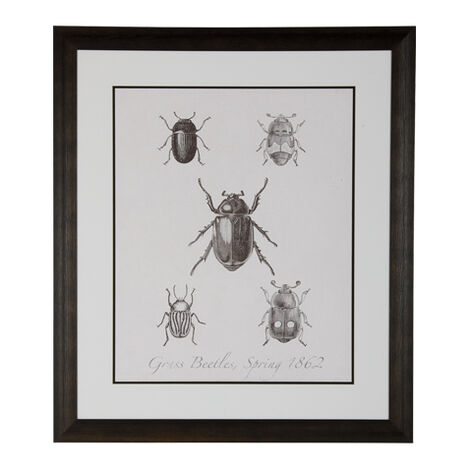 Woodland Insects II ,  , large