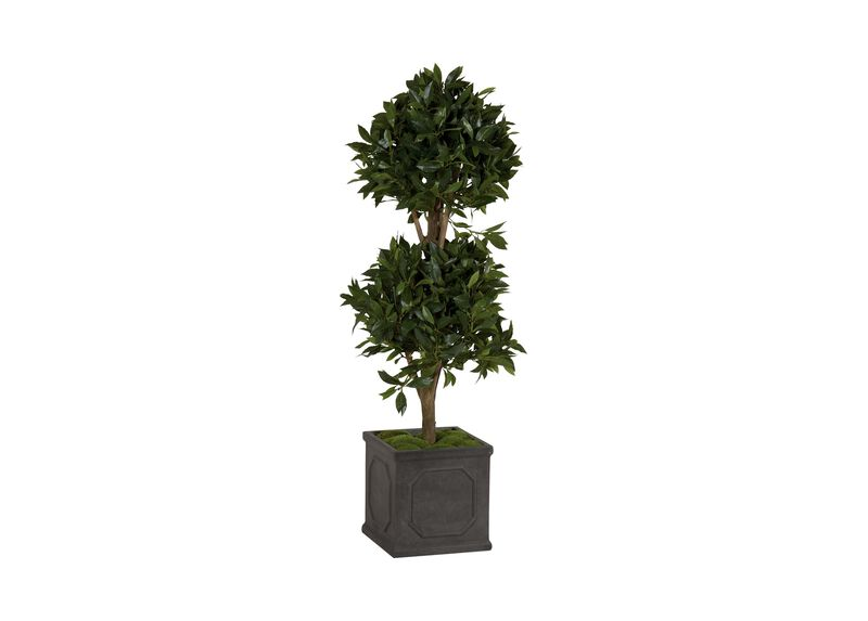 Double Bayleaf Ball Topiary at Ethan Allen in Ormond Beach, FL | Tuggl