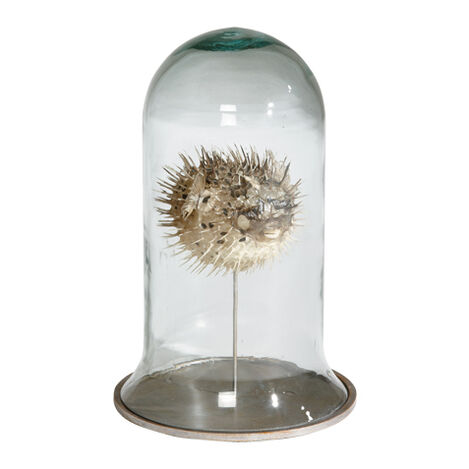 Puffer Fish in Cloche ,  , large