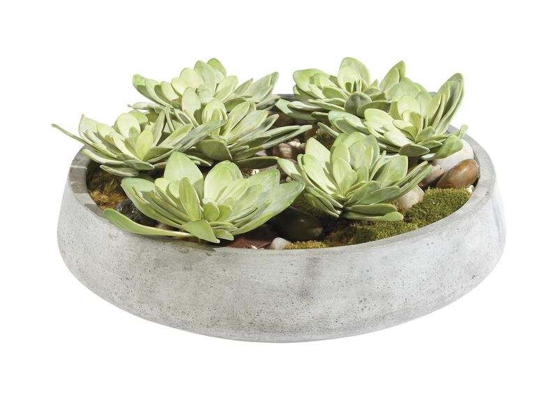 Echeveria in Bowl ,  , large_gray