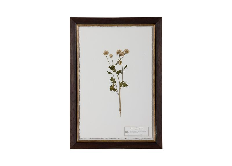 Tanacetum Parthenium II at Ethan Allen in Ormond Beach, FL | Tuggl