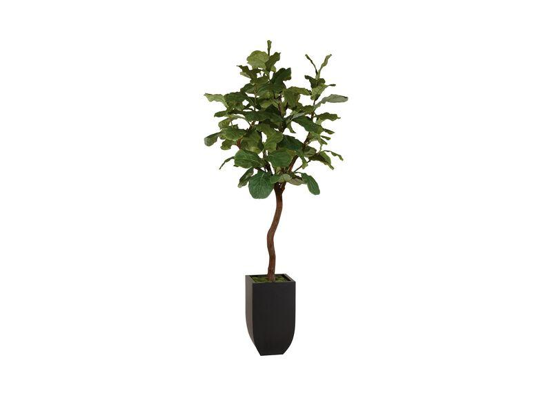 Fiddle Leaf Fig Tree ,  , large_gray