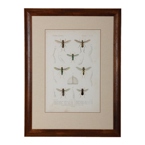 Insect Study II ,  , large