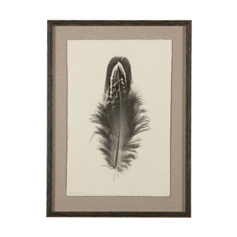 Feather Study II ,  , large
