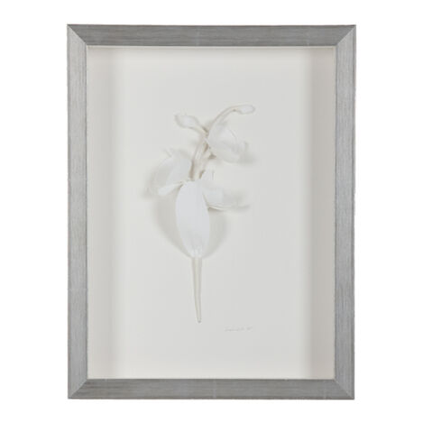White Orchid ,  , large