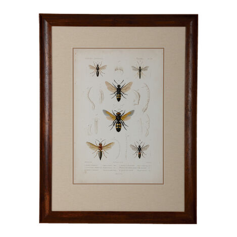 Insect Study III ,  , large