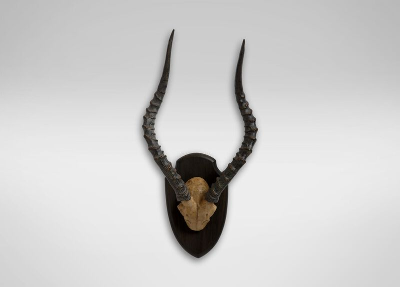 Antique Antelope Horns ,  , large_gray