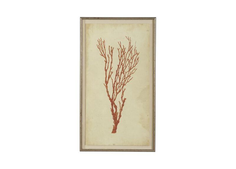 Antique Coral Specimen A ,  , large_gray