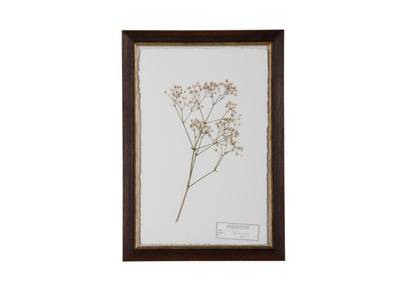 Gypsophila at Ethan Allen in Ormond Beach, FL | Tuggl