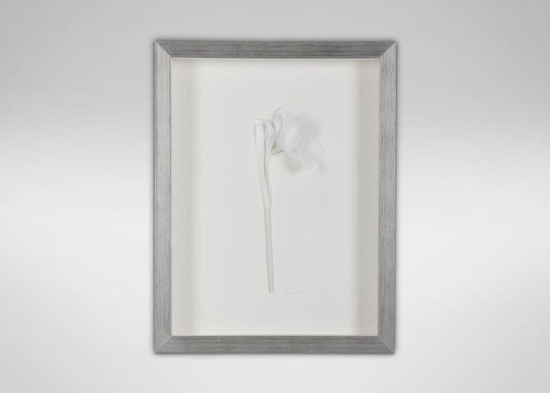 White Daffodil ,  , large_gray
