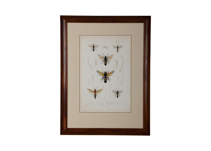 Insect Study III ,  , large_gray