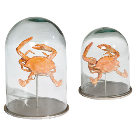 Crab in Glass Cloches ,  , large