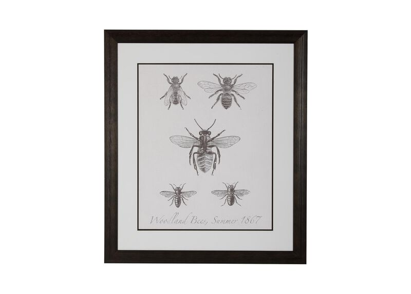 Woodland Insects I ,  , large_gray