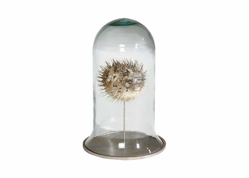 Puffer Fish in Cloche ,  , large_gray