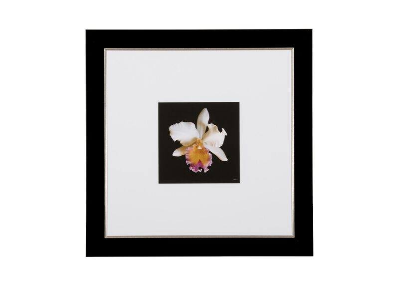 Cattleya Orchid ,  , large_gray