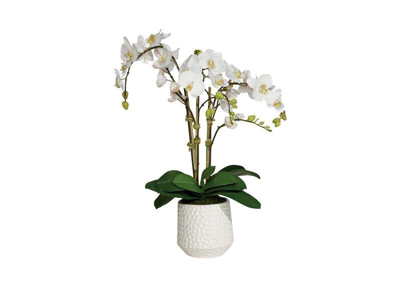 Phalaenopsis in Ceramic Pot at Ethan Allen in Ormond Beach, FL | Tuggl