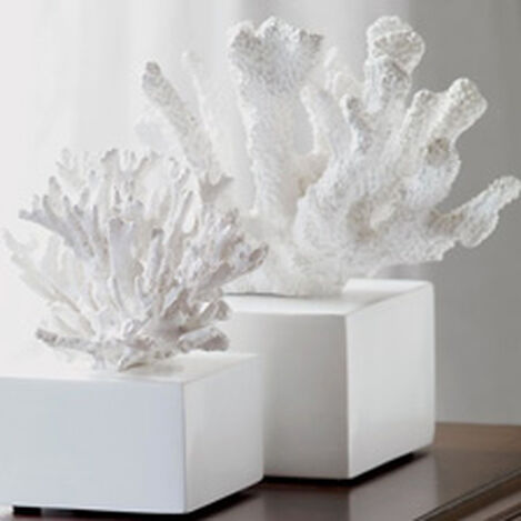 Staghorn Coral ,  , hover_image