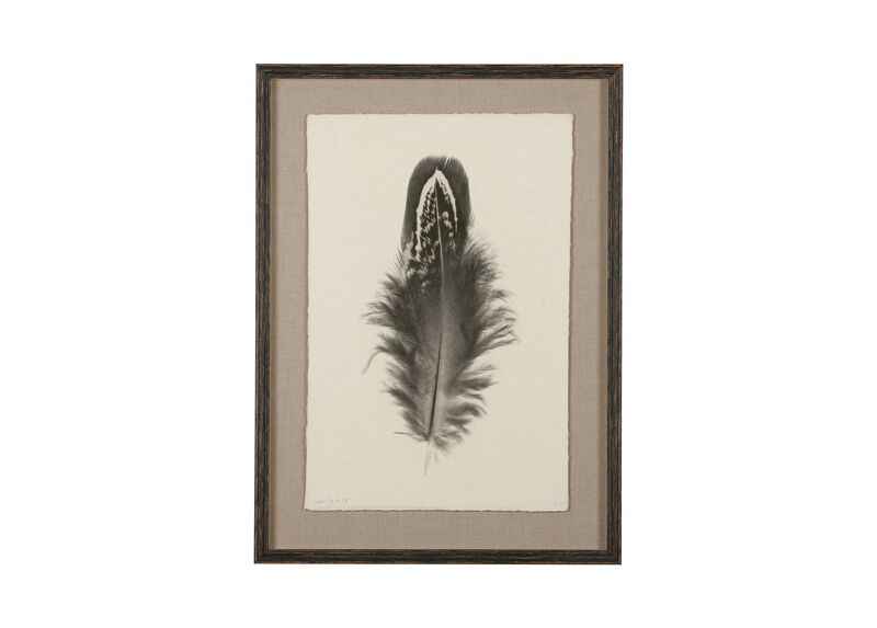 Feather Study II ,  , large_gray