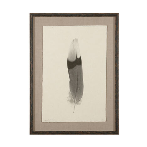 Feather Study III ,  , large
