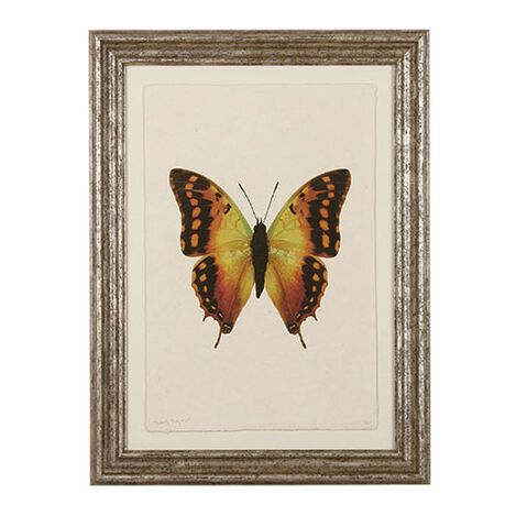 Butterfly Study III ,  , large
