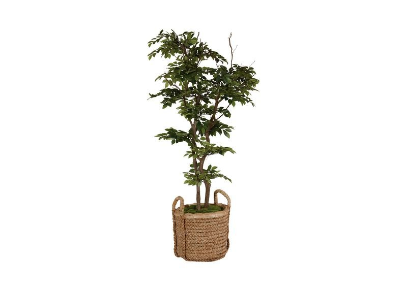 Sakaki Tree