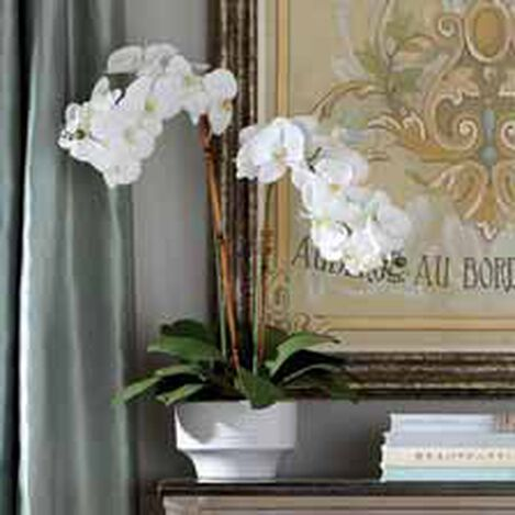 White Orchid in Ceramic Pot ,  , hover_image