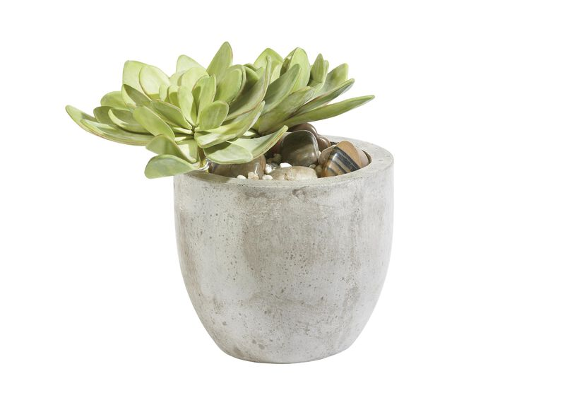 Echeveria in Pot ,  , large_gray