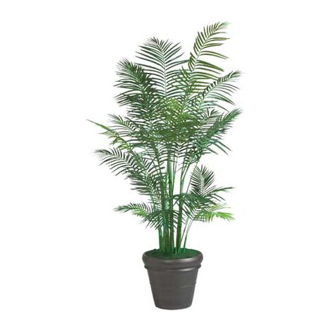Grand Areca Palm Tree ,  , large