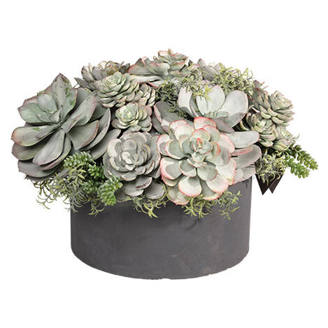 Mixed Succulents in Round Tray Product Tile Image 442227