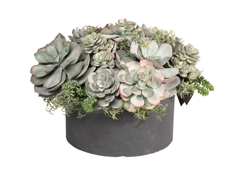 Mixed Succulents in Round Planter