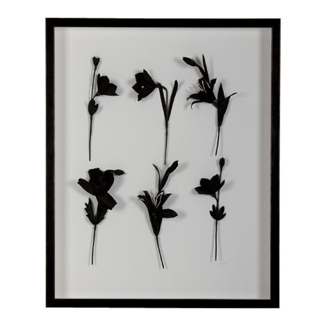 Ebony Flowers I ,  , large