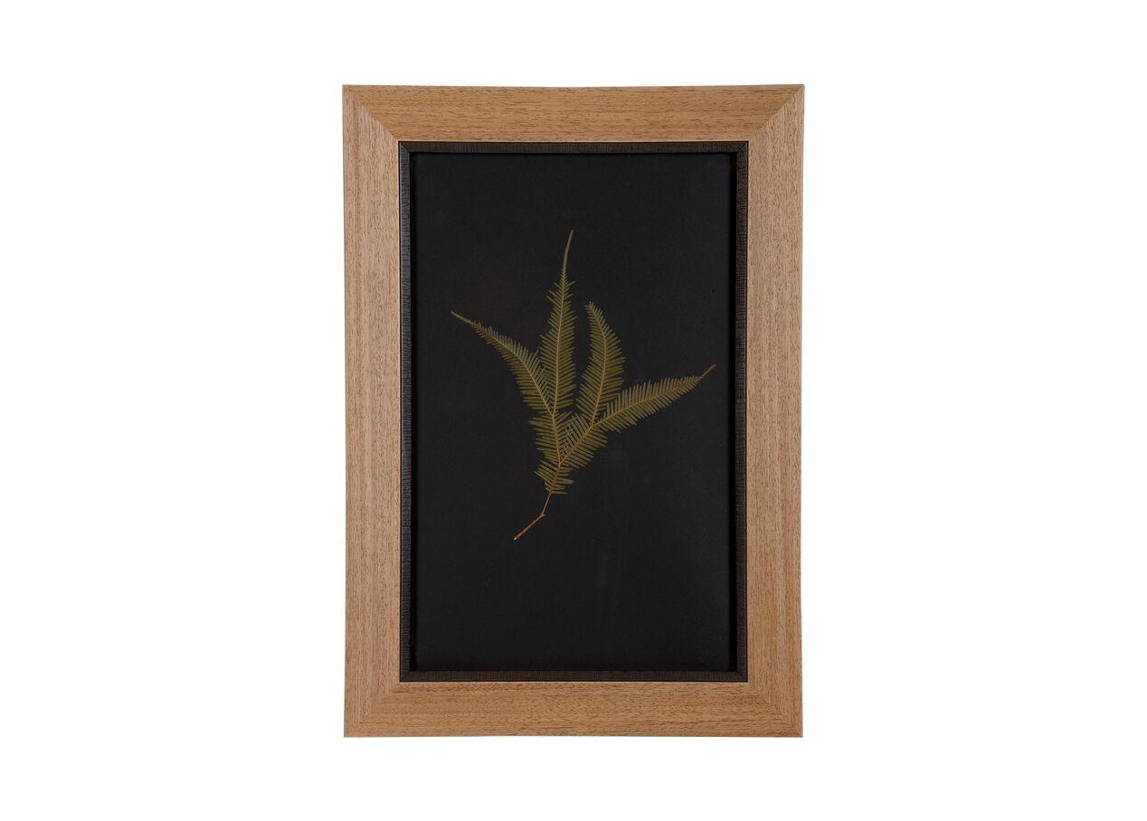 Botanicals on Black XI | Pressed Botanicals | Ethan Allen
