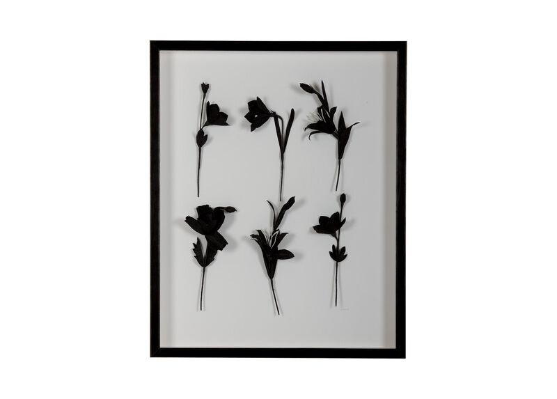 Ebony Flowers I