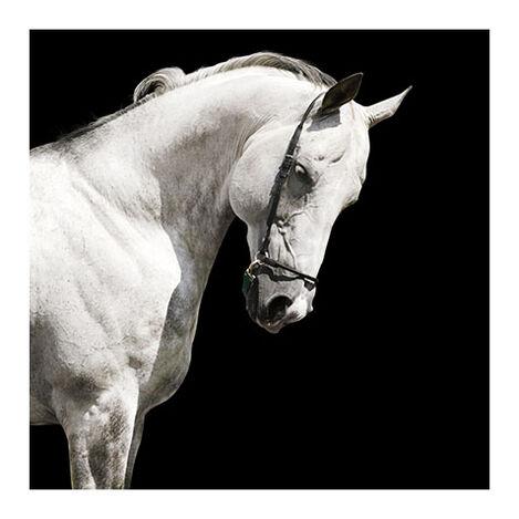 White Stallion Product Tile Image 1130101