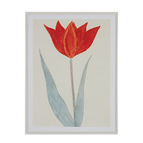 Red Tulip I Product Tile Image 073122A