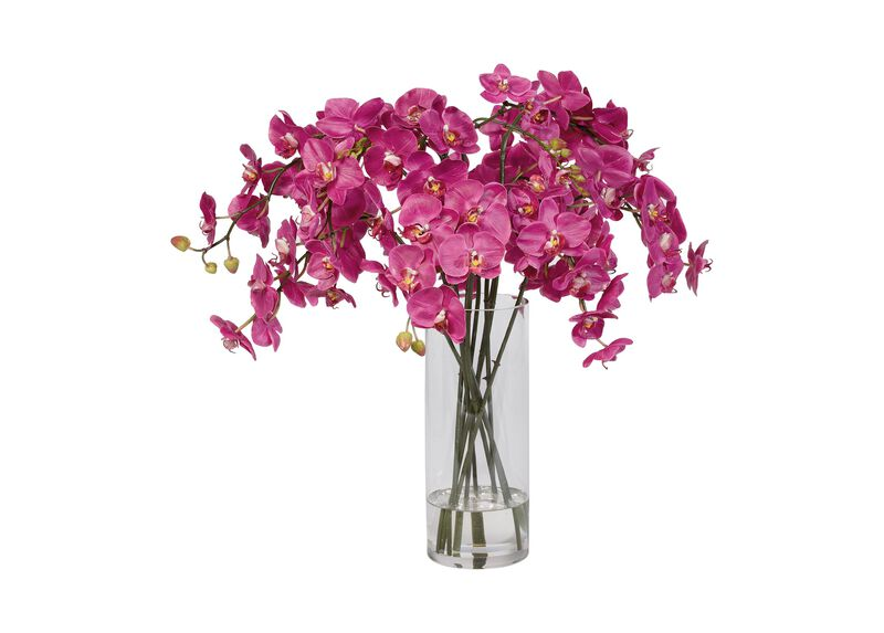 Fuchsia Orchids in Glass Vase