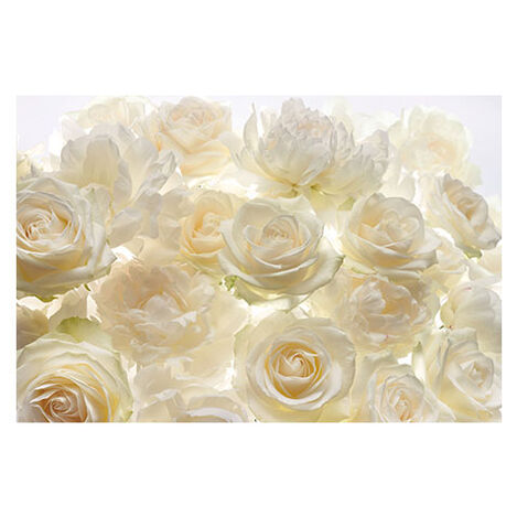 Ivory Rose Wall Mural Product Tile Image 790770