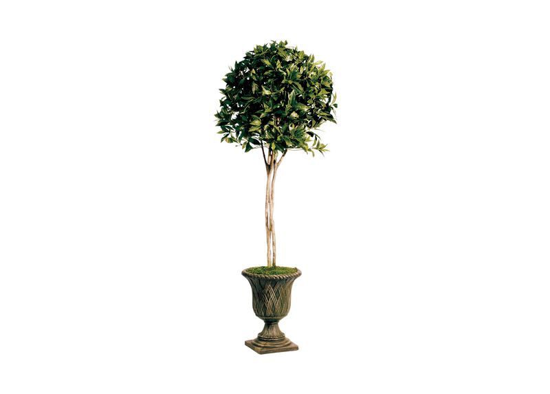 Sweet Bay Topiary