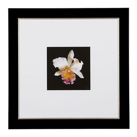 Cattleya Orchid ,  , large