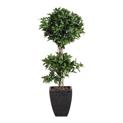 Double Laurel Topiary Product Tile Image 443723