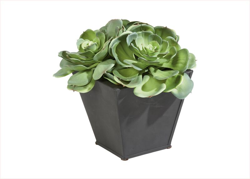 Succulents in Metal Container
