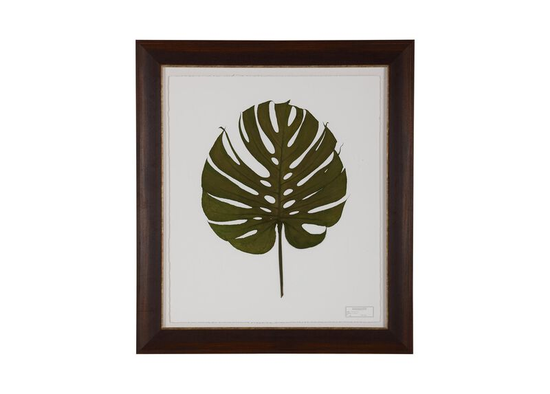 Monstera II ,  , large_gray