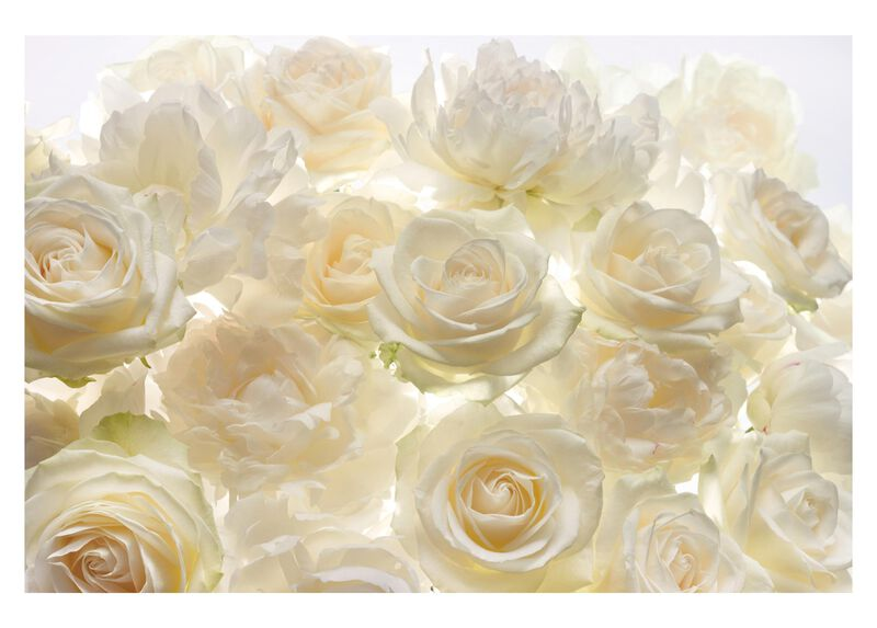 Ivory Rose Wall Mural