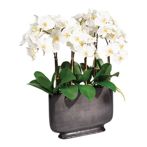 White Orchid in Rectangular Planter Product Tile Image 442205