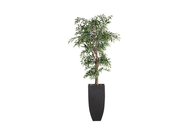Smilax Tree in Tall Terrazo Pot