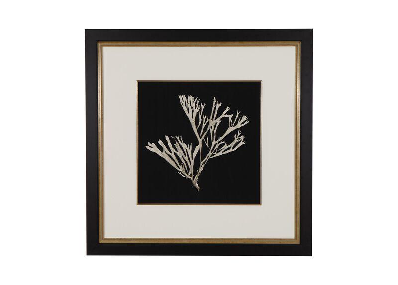 Seaweed on Black II