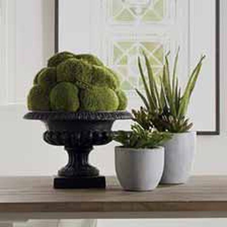Moss Ball in Urn ,  , hover_image