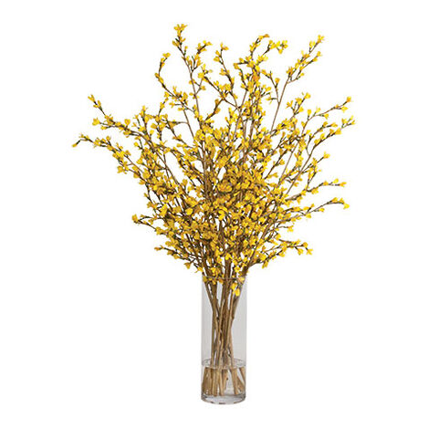Tall Forsythia Watergarden Product Tile Image 446637